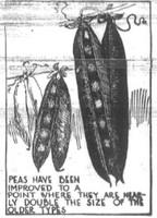 Illustration of peas