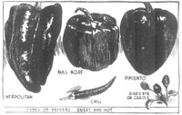 Illustration of several varieties of peppers